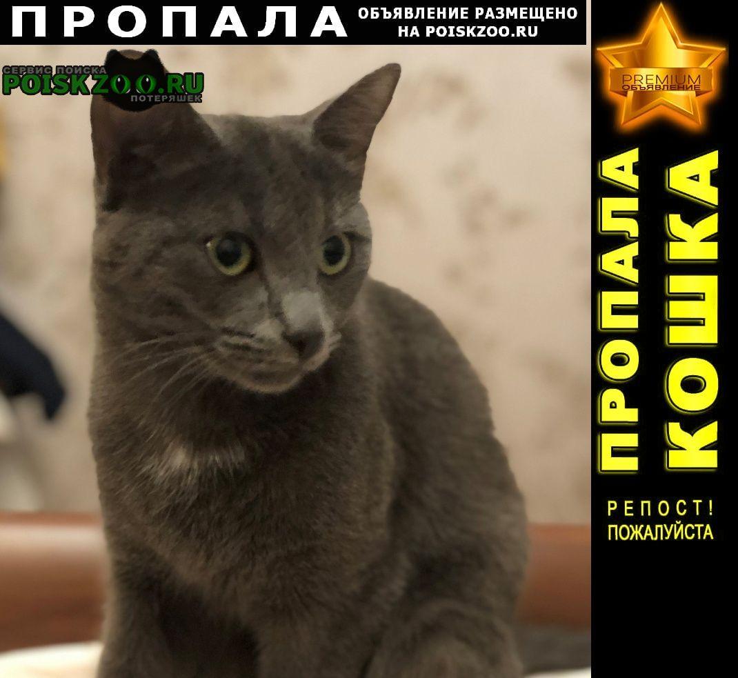 Пропала кошка отечественная улица д 7 Санкт-Петербург