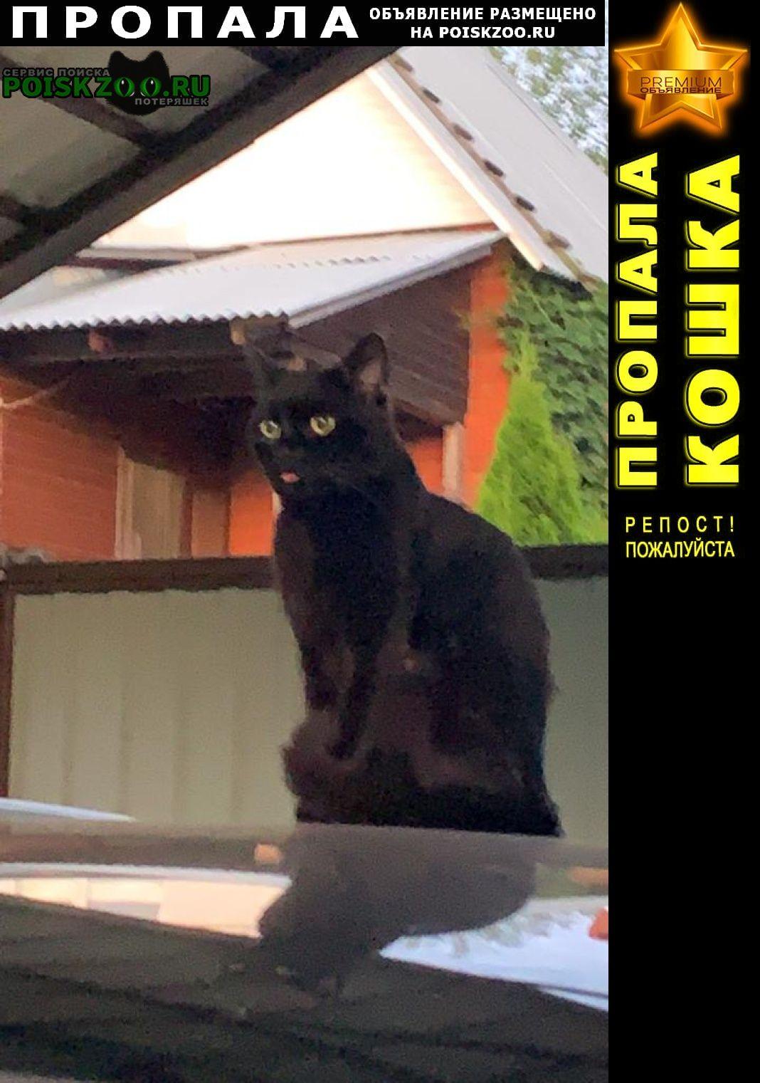Пропала кошка чёрный кот Апрелевка