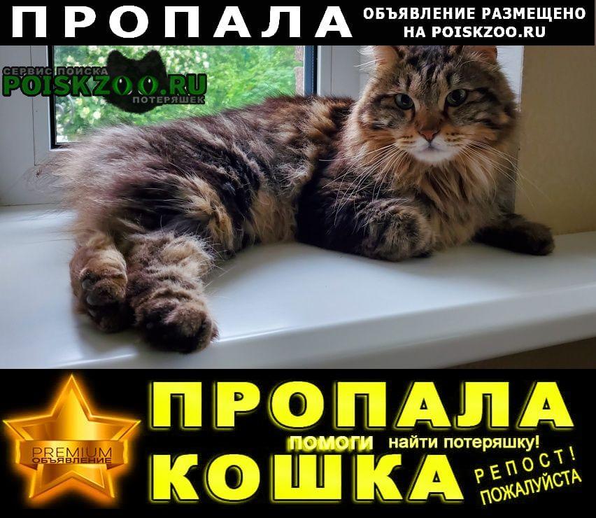 Пропала кошка курильский бобтейл Зеленоград