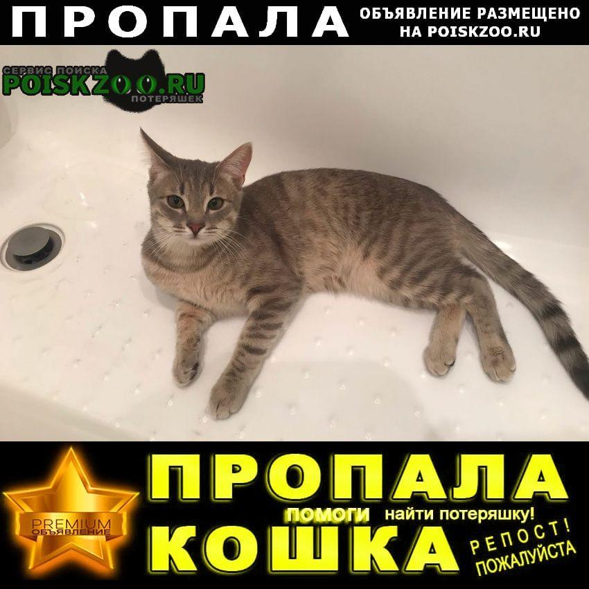 Рязань Пропал кот