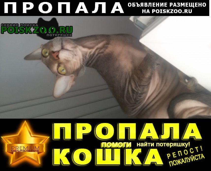 Пропала кошка вчера из подьезда Новороссийск