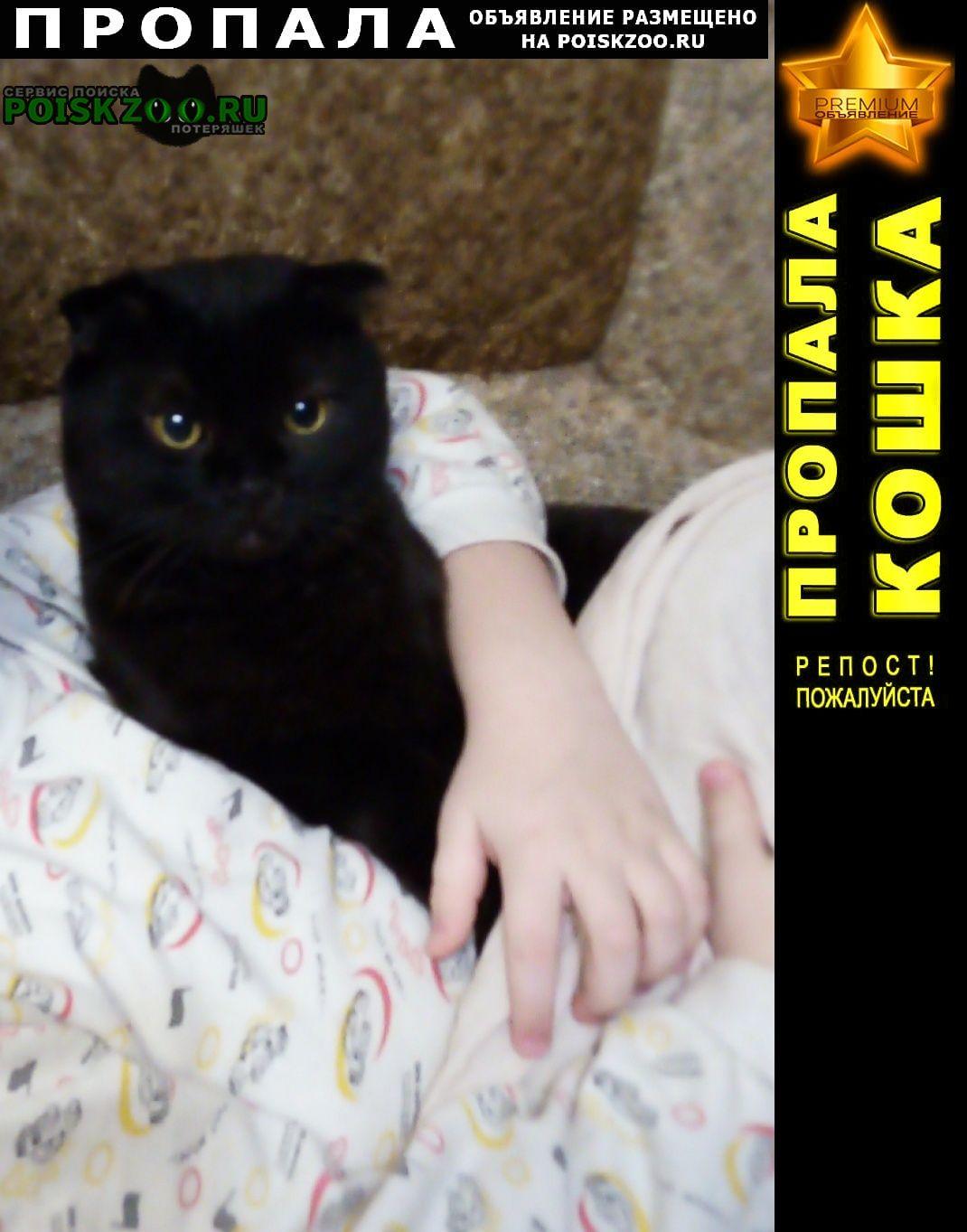 Пропала кошка кот. Воронеж