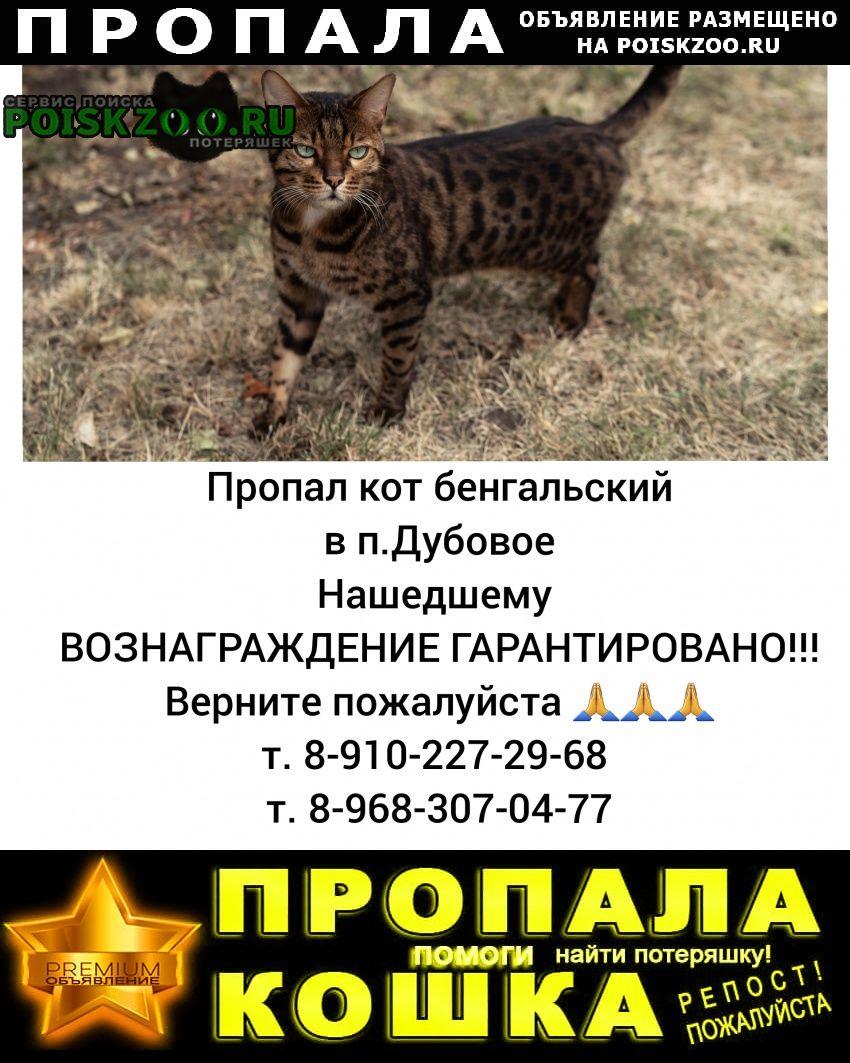 Пропал кот бенгальский Белгород