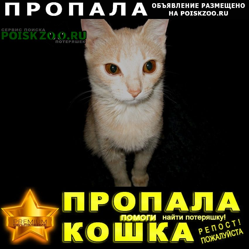 Пропала кошка цейлонская Воронеж