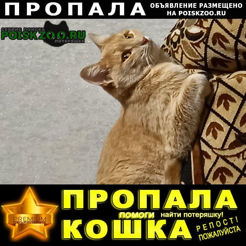 Пропала кошка помогите пожалуйста найти нашу любимицу Нижний Новгород