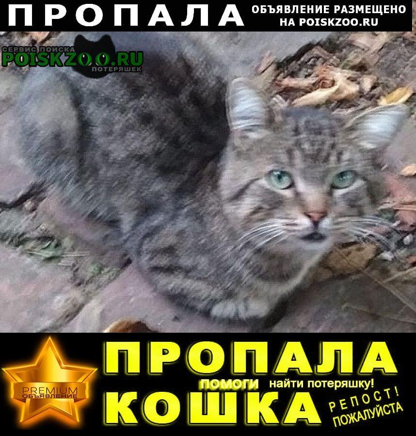Пропал кот помогите найти любимого Ростов-на-Дону