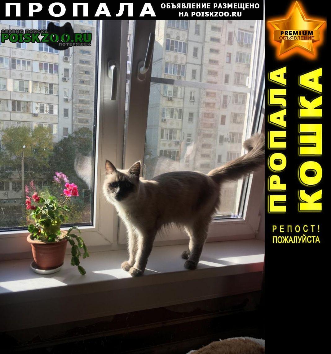 Пропал кот Астрахань