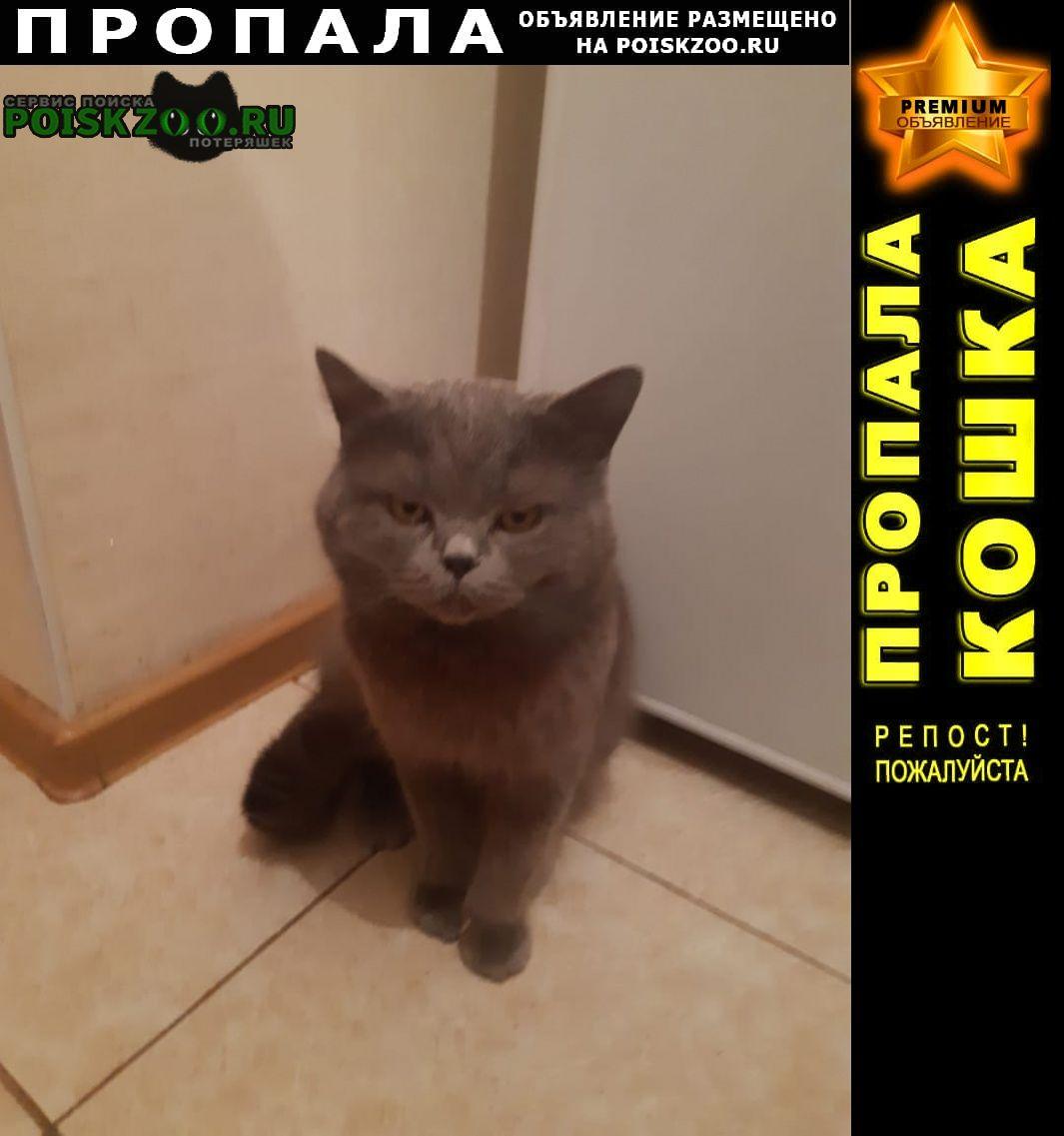 Пропал кот британец. Новороссийск