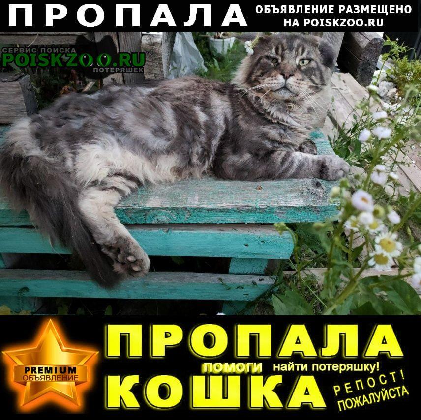 Пропал кот очень ищем Чехов