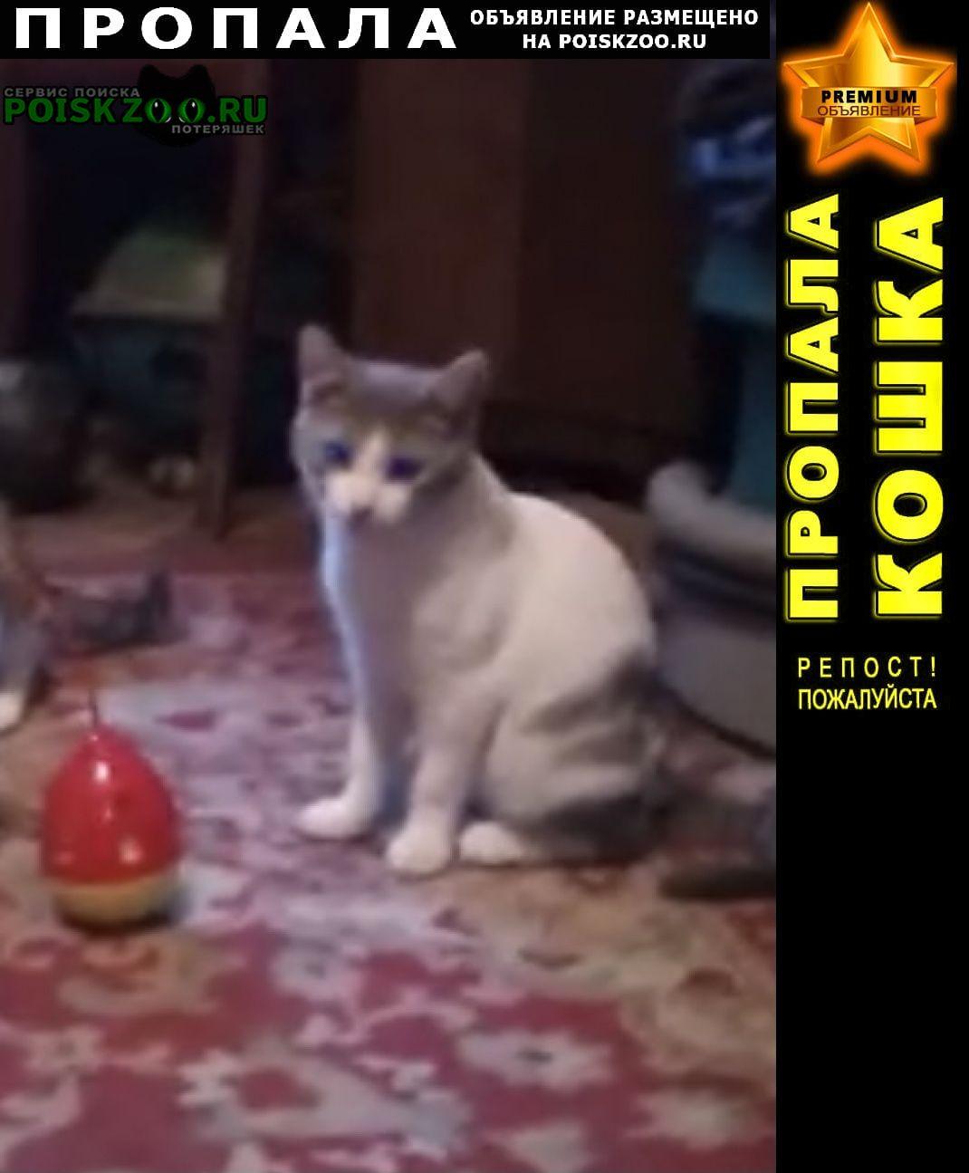 Санкт-Петербург Пропал кот бело-серый енок