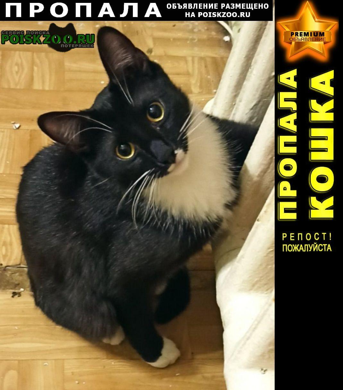 Пропал кот домашний Санкт-Петербург