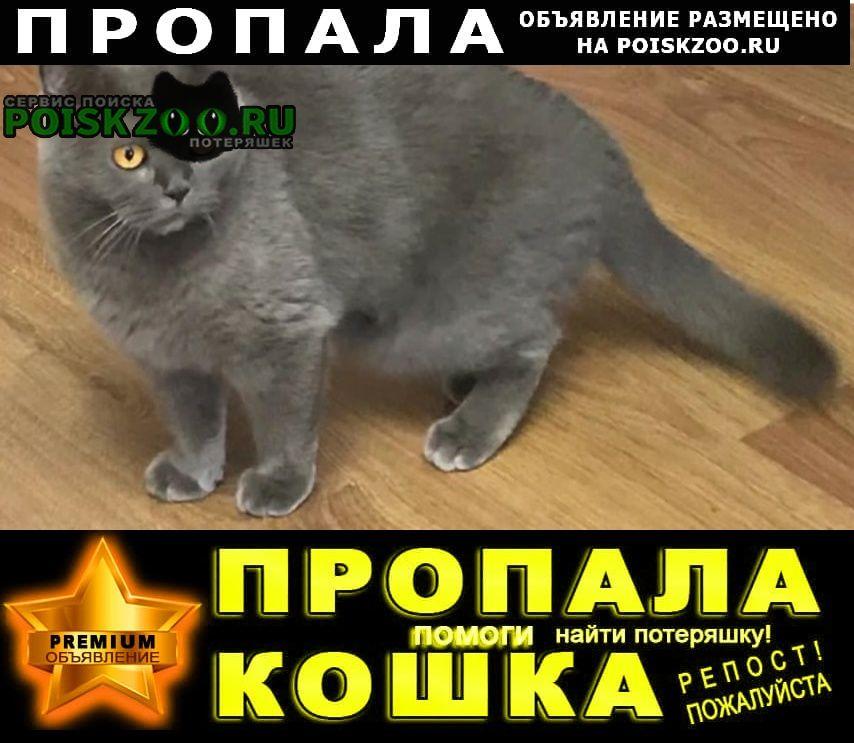 Санкт-Петербург Пропала кошка