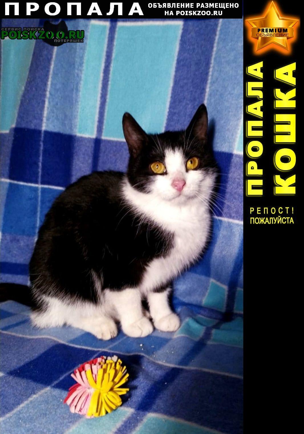 Пропала кошка черно-белая молодая ласковая Мценск