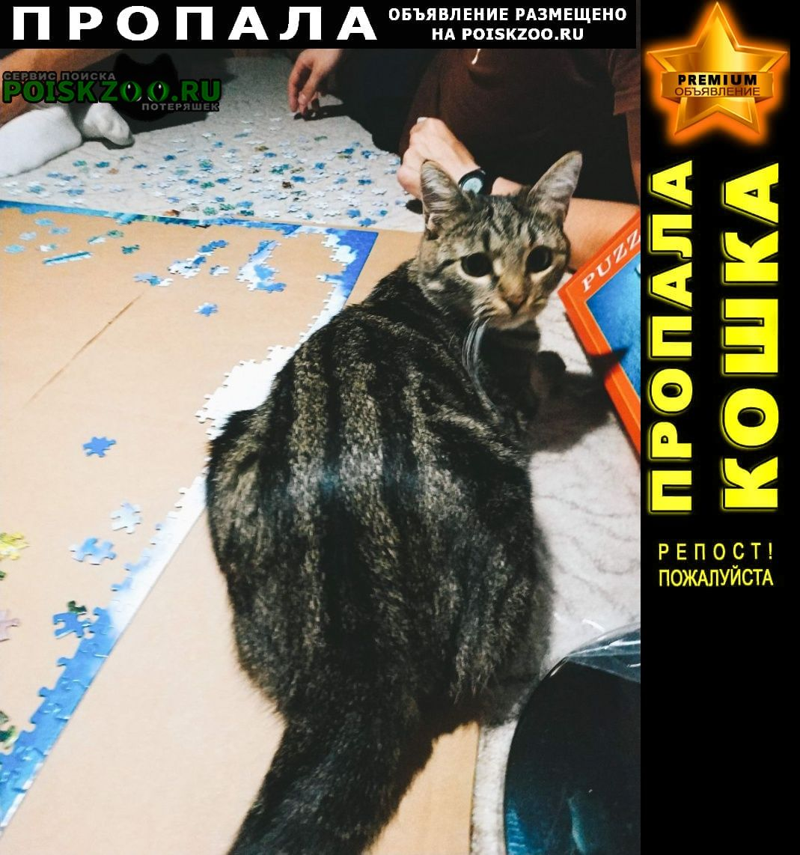 Пропала кошка южное бутово, изюмская 43к1 Москва