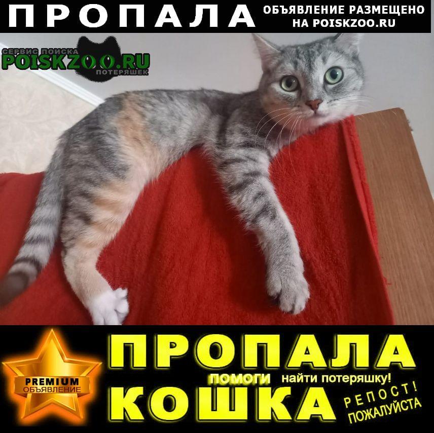 Новосибирск Пропала кошка