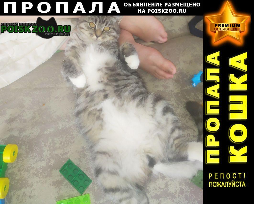 Пропал кот Нижний Тагил