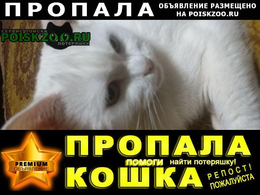 Пропал кот Королев