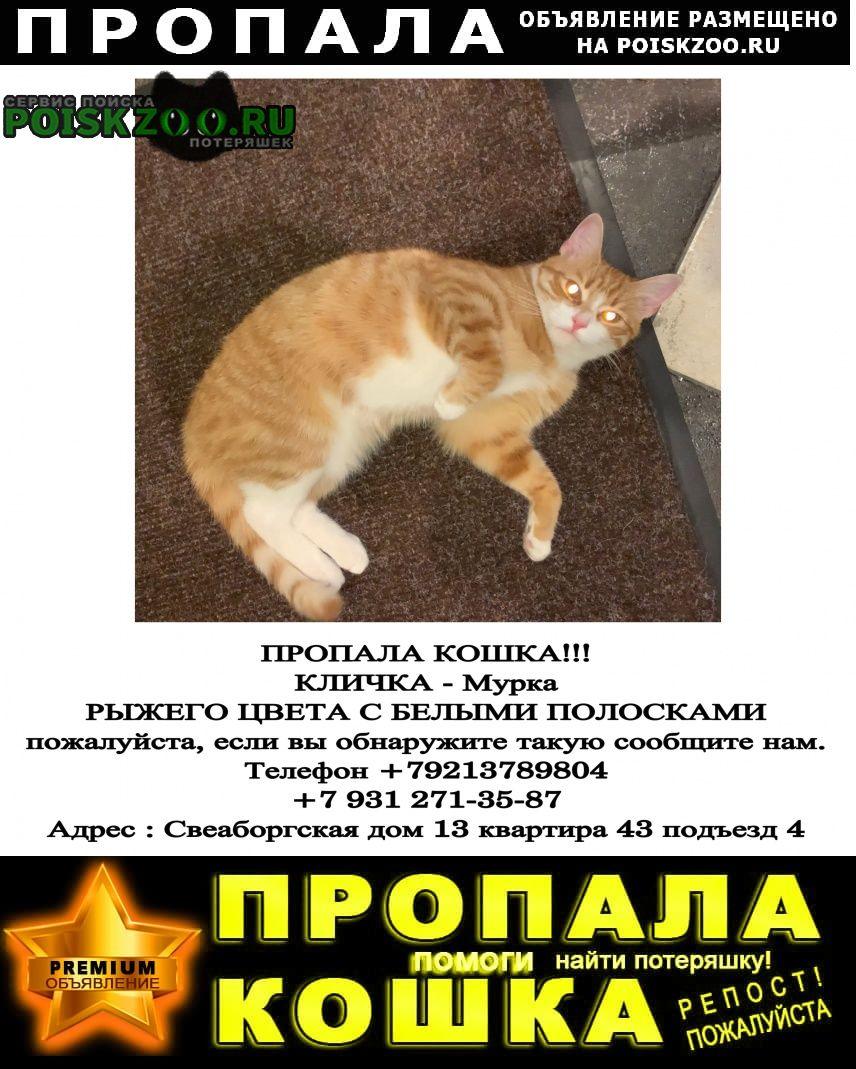 Санкт-Петербург Пропала кошка.