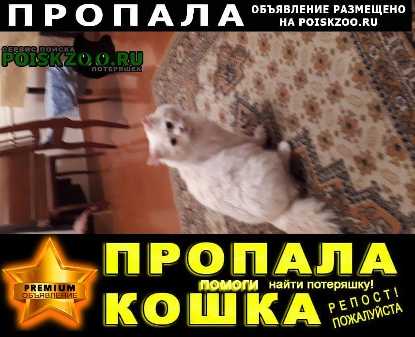Уфа Пропал кот ищем а