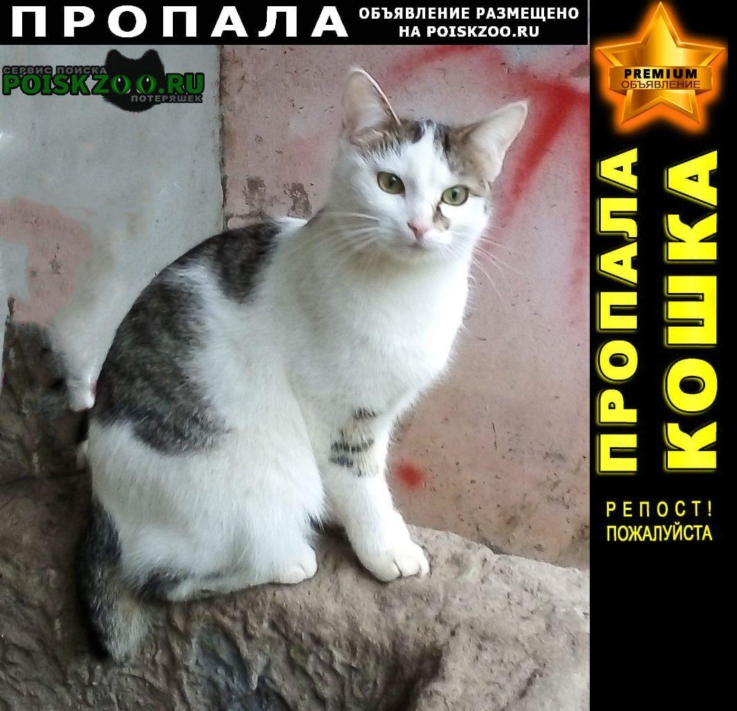 Пропала кошка Кострома