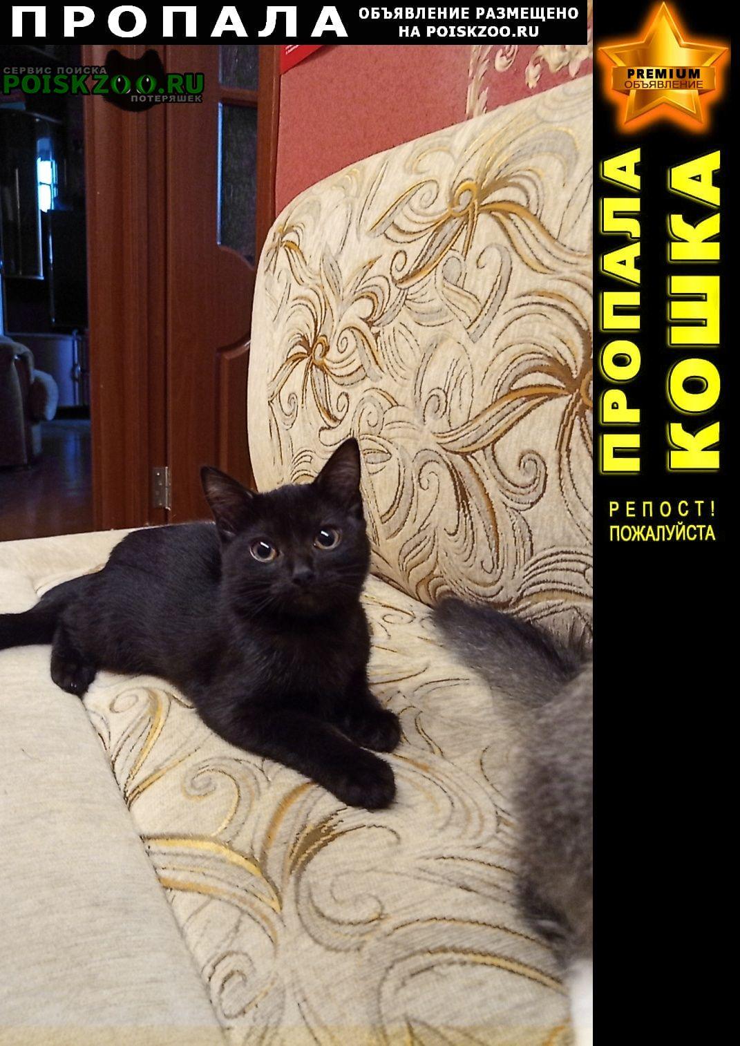 Пропала кошка Северодвинск