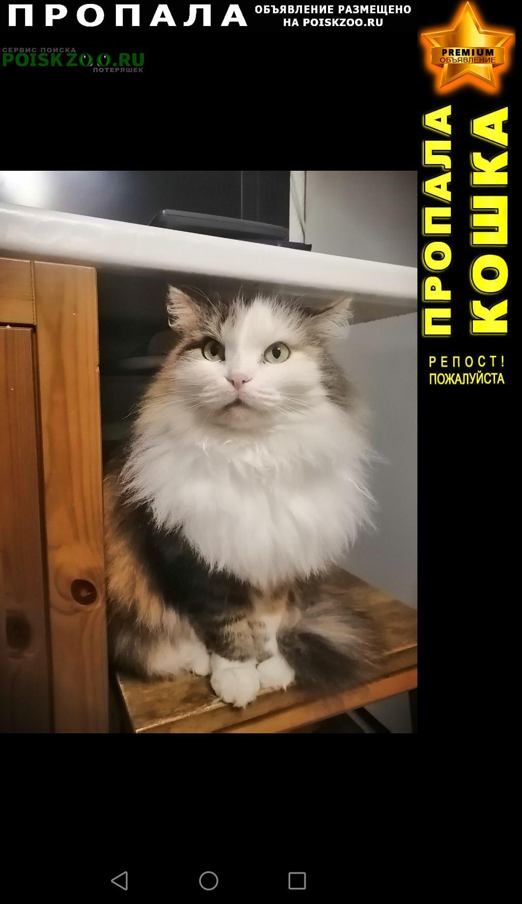 Новосибирск Пропала кошка трехцветная