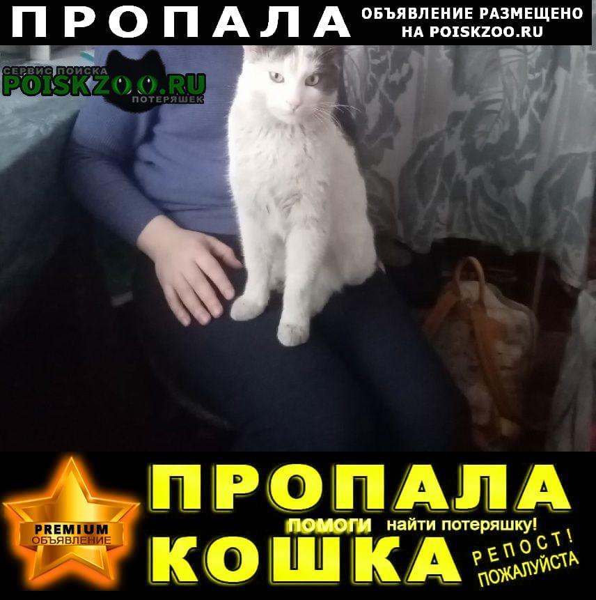 Пропал кот белыш в р-не ул. бекетова Нижний Новгород