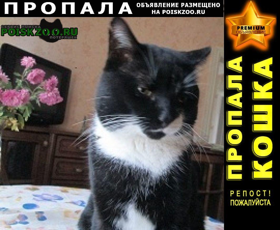 Пропал кот Липецк