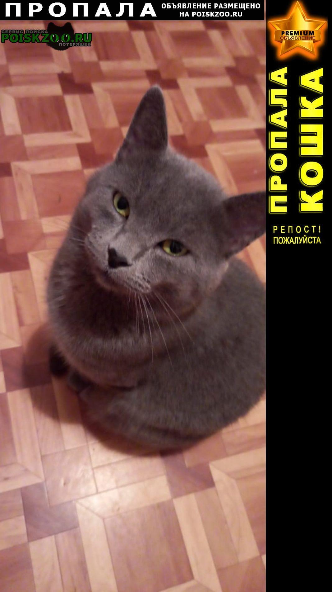 Пропал кот, зовут стёпа, 2 года, 13 мая. Сочи