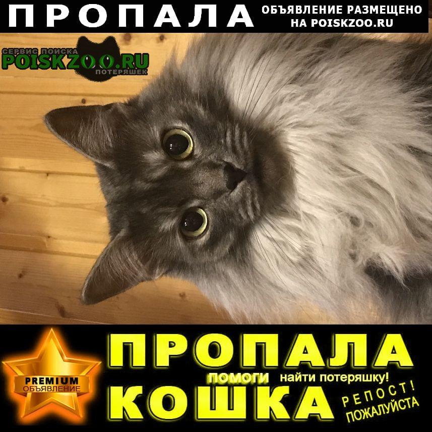 Пропал кот серый по кличке марсик Удельная