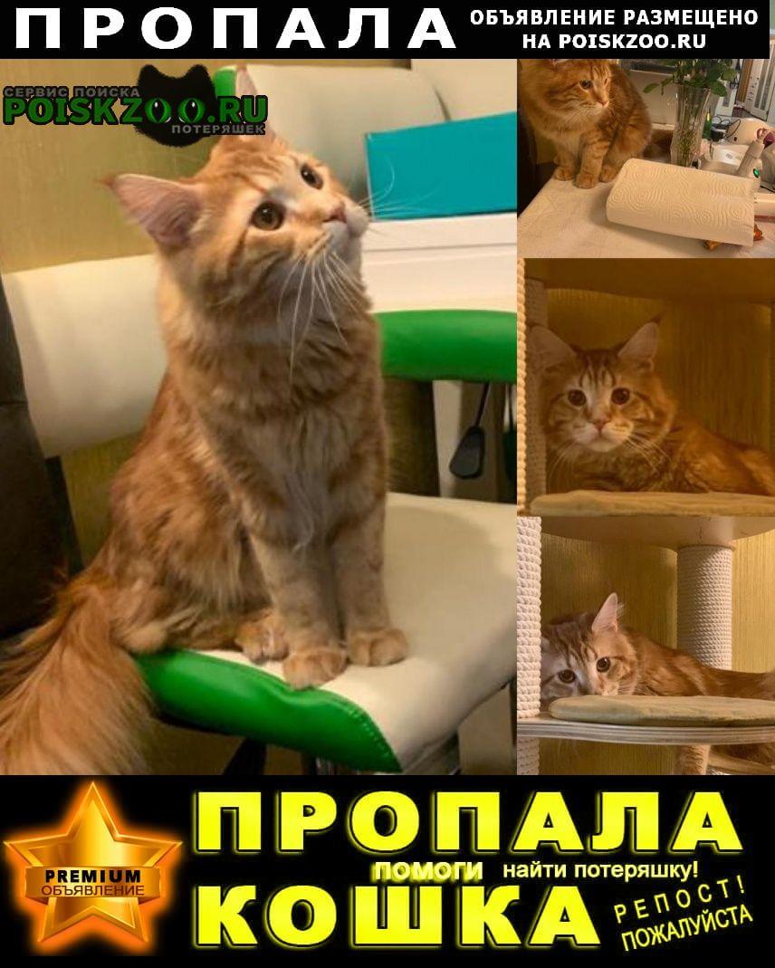 Пропал кот вознаграждение 20т.р Щелково