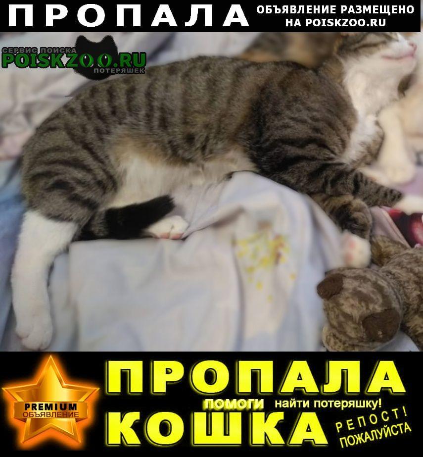 Пропал кот.г. Подольск
