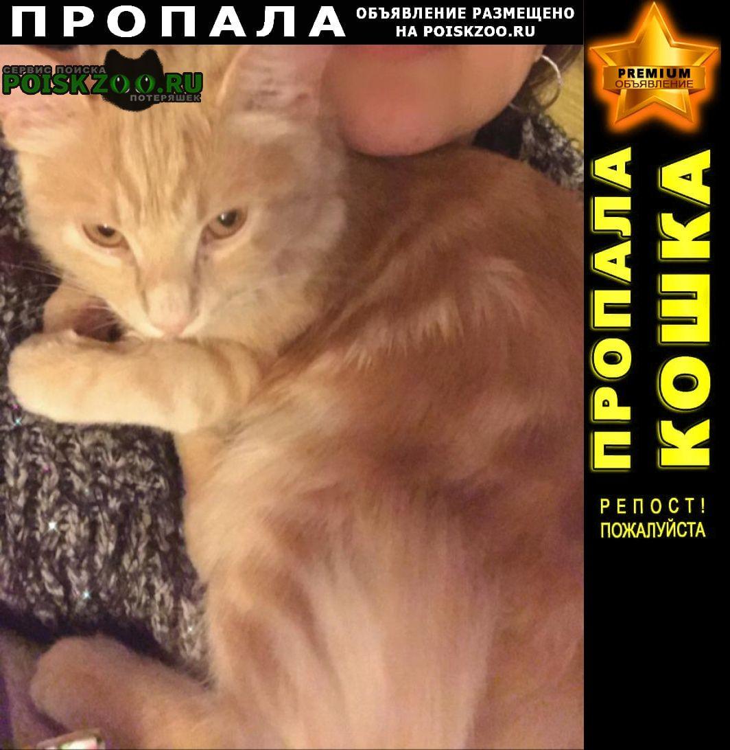 Пропала кошка 18 мая район радио рынка Ростов-на-Дону