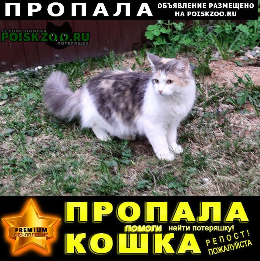 Иваново Пропала кошка молодая сима