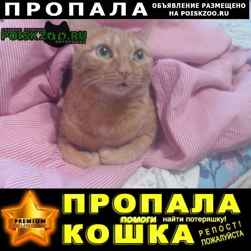Пропал кот рыжий гладкий с длинным хвостом Казань