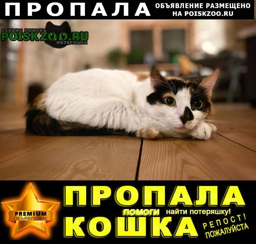 Пропала кошка Одинцово