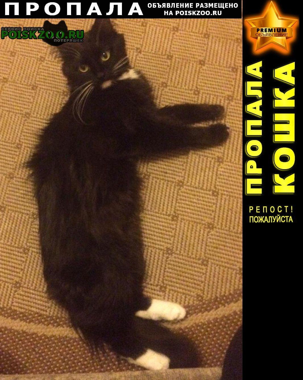 Москва Пропала кошка черная