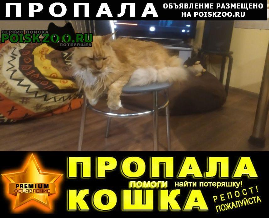 Пропал кот рыжий мейн-кун Нижний Новгород