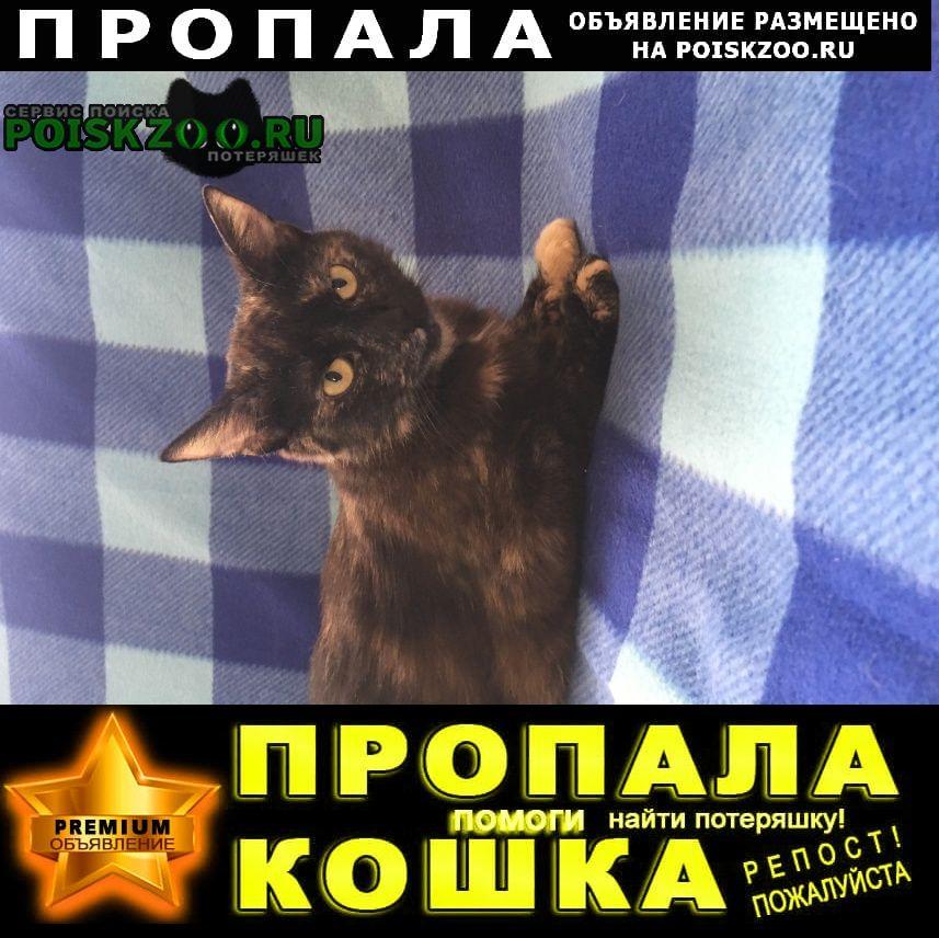 Пропала кошка Климовск