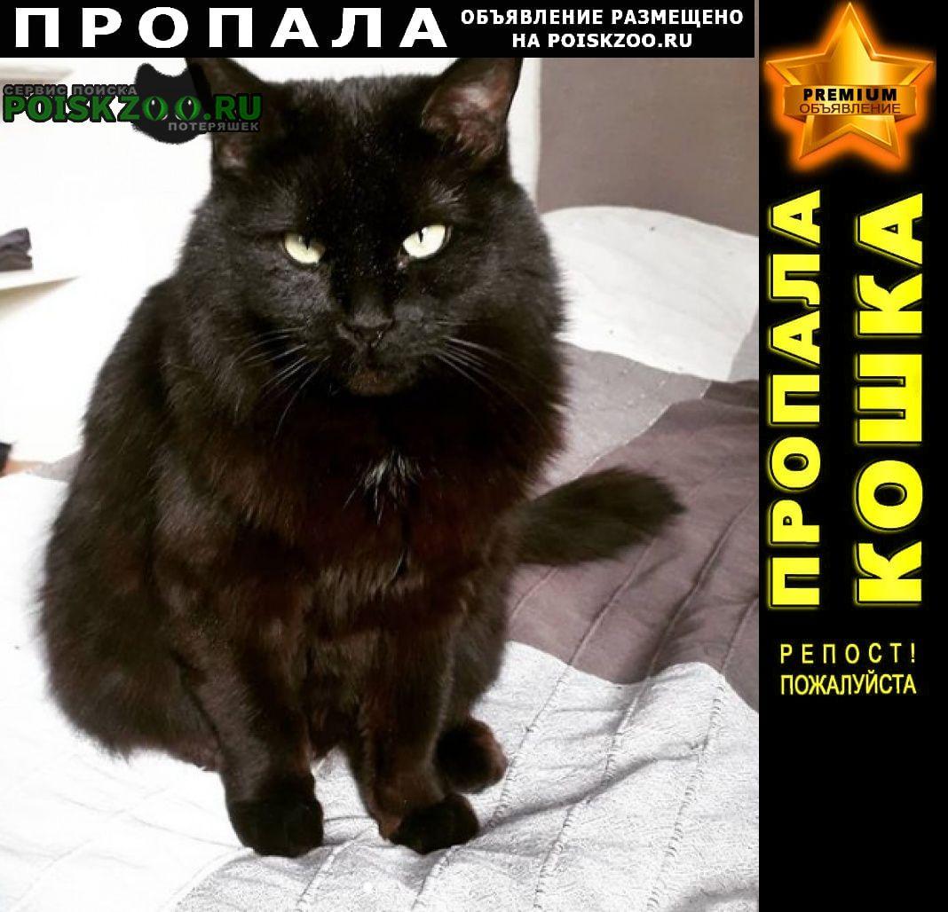 Пропал кот черный в синем ошейнике Санкт-Петербург