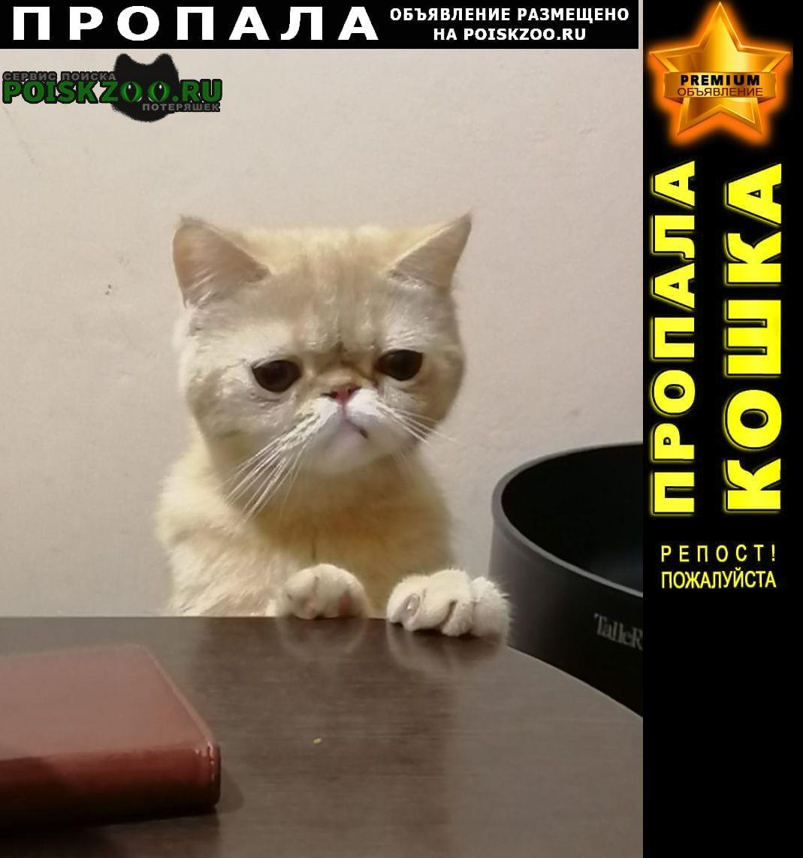 Пропала кошка экзот Балашиха