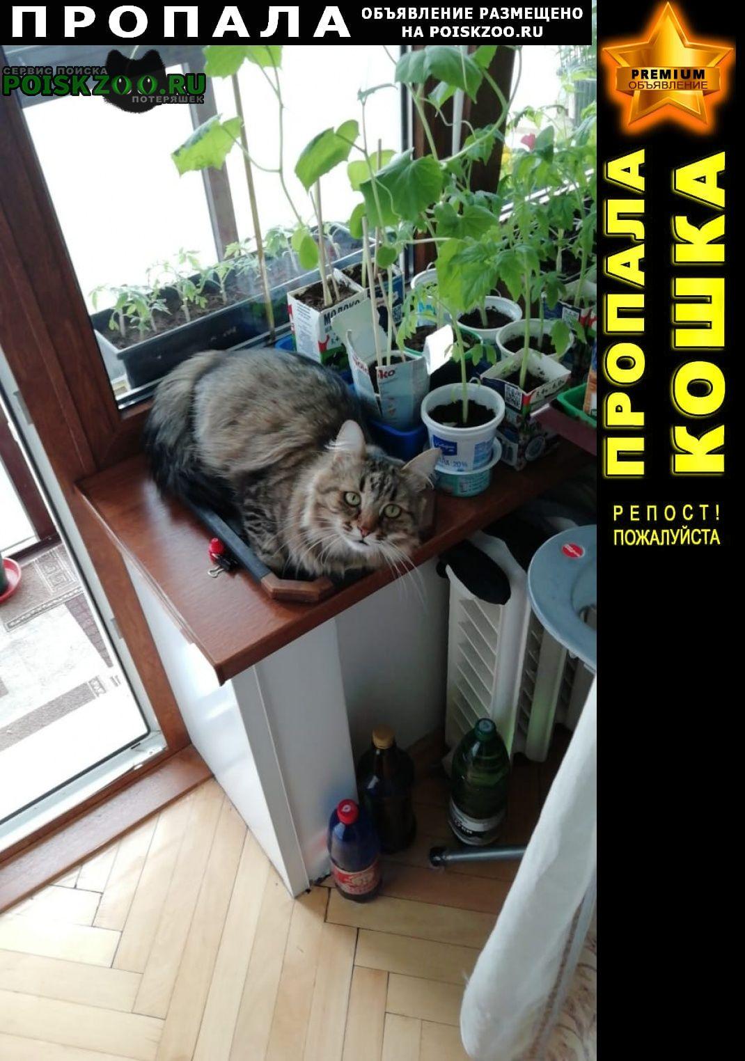 Пропала кошка Хотьково
