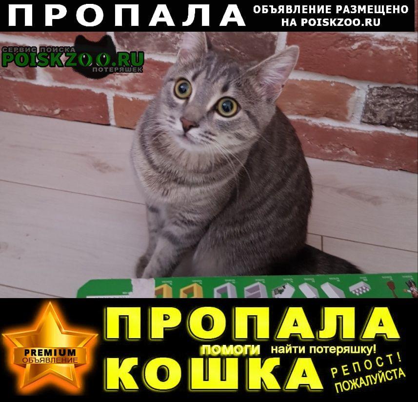 Сходня Пропала кошка 03.06. д. жаворонки