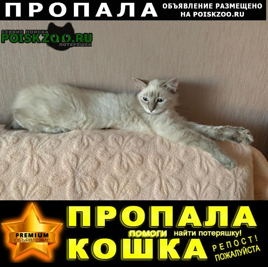 Пропала кошка розовый ошейник Астрахань