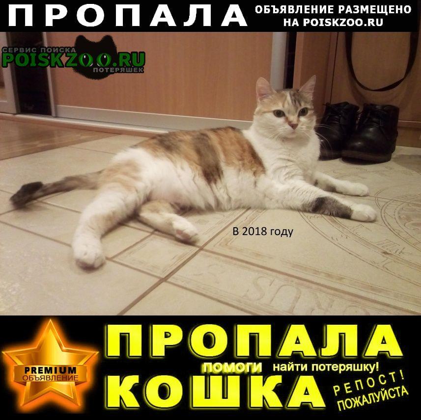Пропала кошка помогите найти кошку Киржач