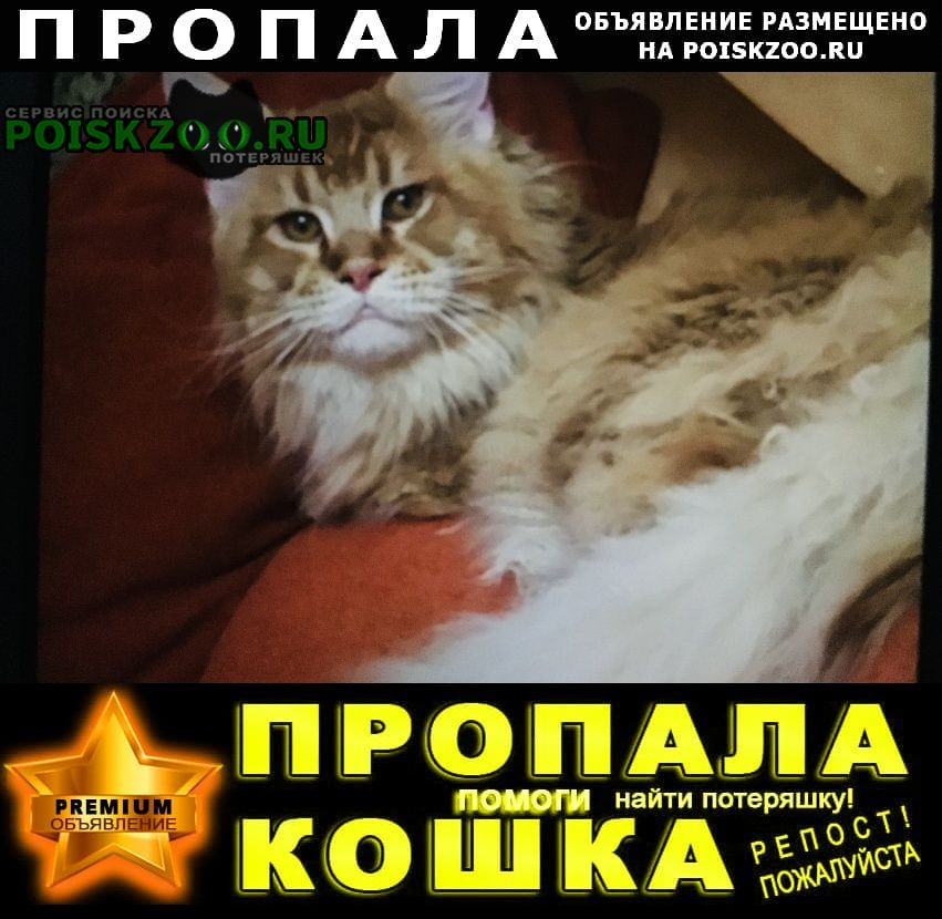 Пропал кот Красногорск