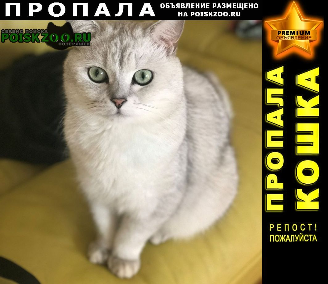Пропал кот 1 июля Загорянский