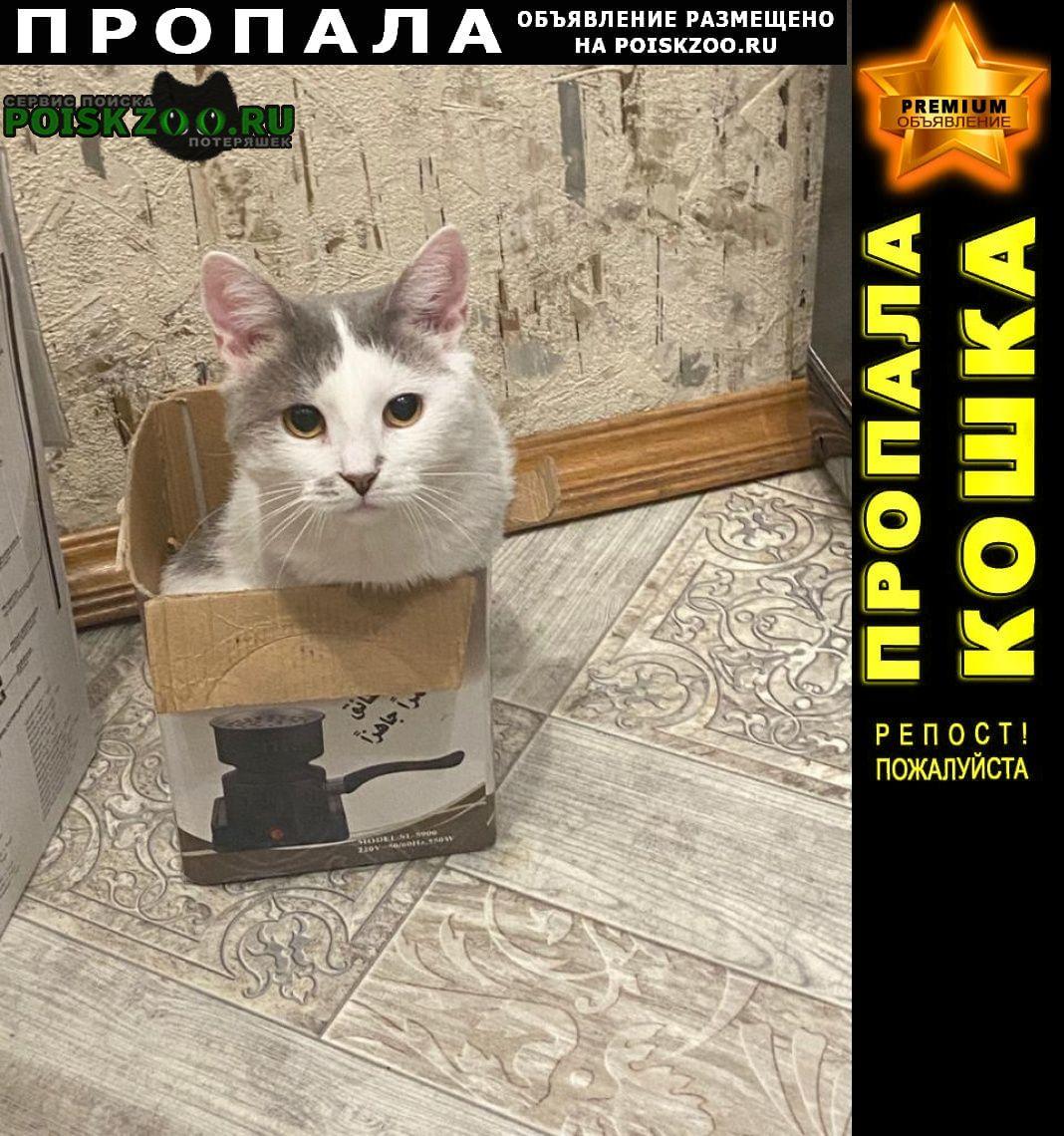Пропала кошка киса по кличке бусинка Купавна