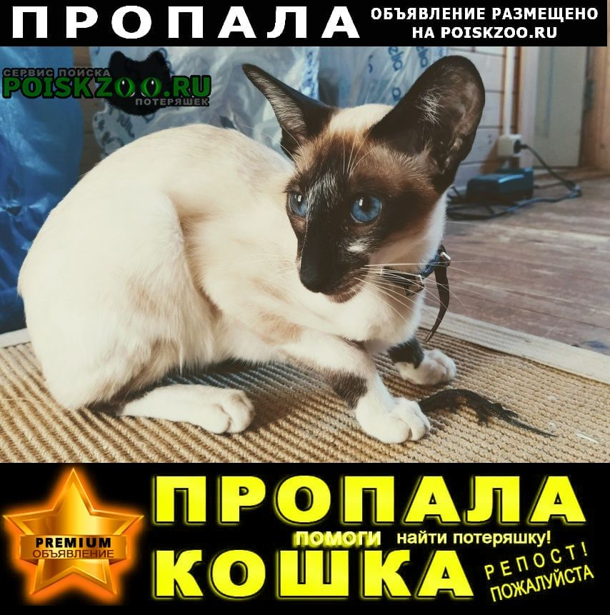 Пропал кот Конаково