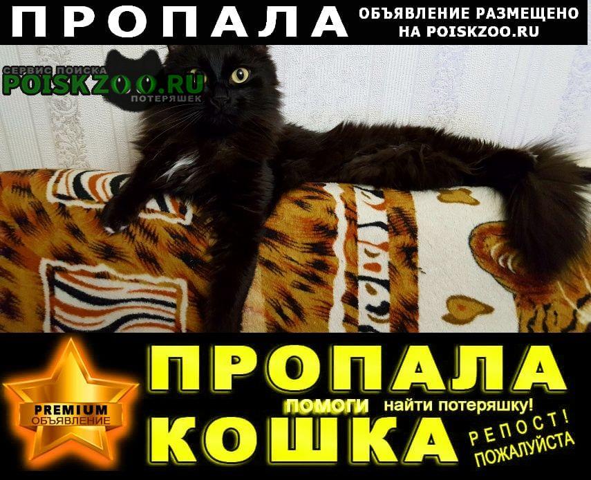 Красноармейск (Московская обл.) Пропал кот помогите ику вернуться домой